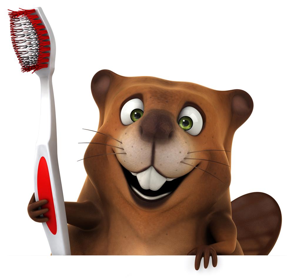 השתלת שיניים בלסת העליונה - הניסיון והזהירות משתלמים