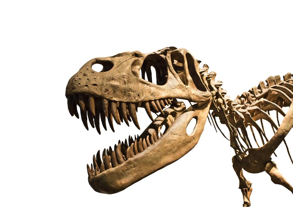 השתלות שיניים סקירה היסטורית