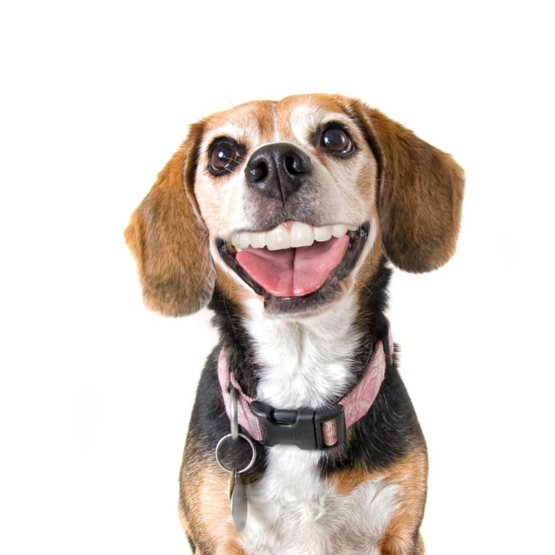 טיפול שיניים לכלבים שמחים